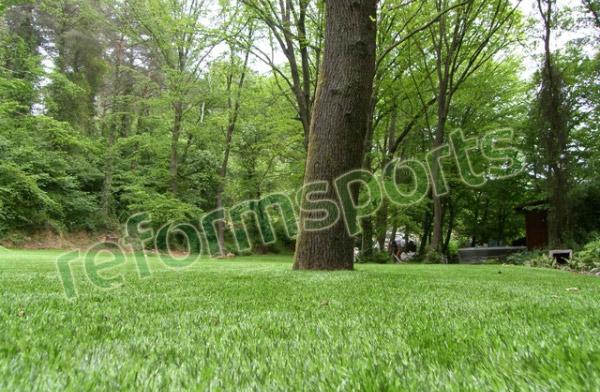 Dekoratif Çim, dekoratif çim görselleri, gerçek gibi suni çim, dekoratif suni çim halı,
