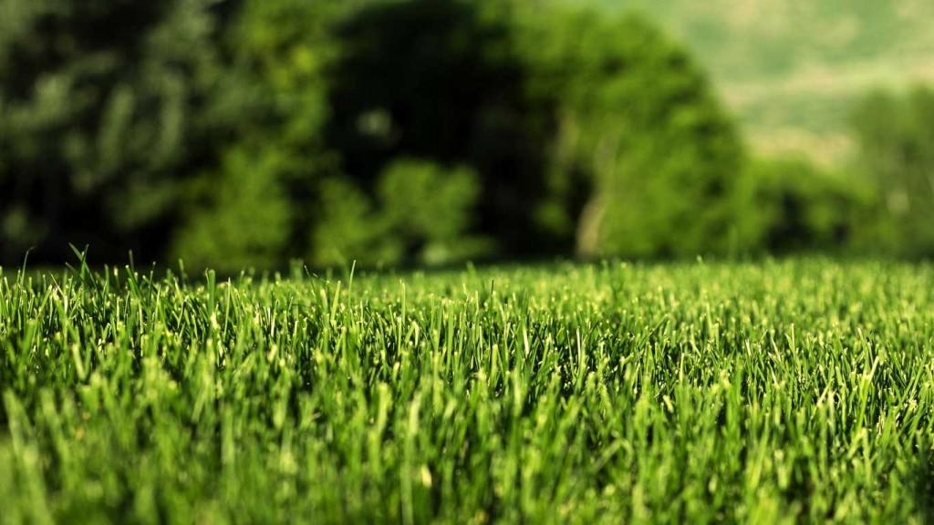 bahçe suni çim, bahçe için suni çim, payzaj suni çim, suni çim,